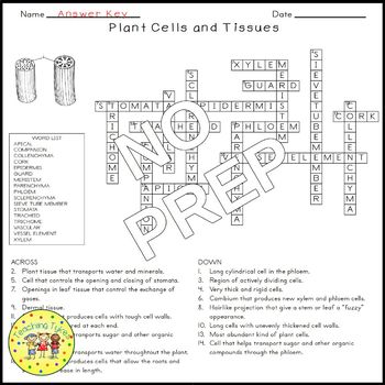 Plant Cells and Tissues Biology Science Crossword Coloring Middle School