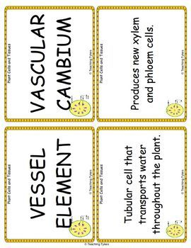 Plant Cells and Tissues Vocabulary Cards
