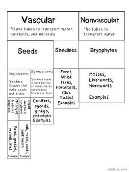 plant classification by lah in ga teachers pay teachers