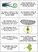 Plant Classification Foldable and Activity