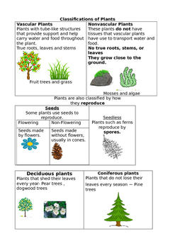 Plant Classification Anchor charts