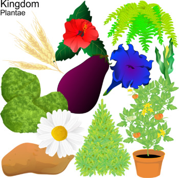 Plant Classification Clip Art