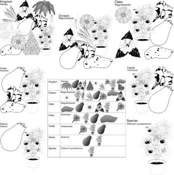 Plant Classification Clip Art