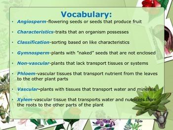 Plant Classification SL1b