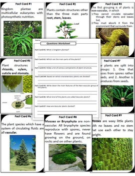 Plant Classification Scavenger Hunt - A great tool to Review the Unit