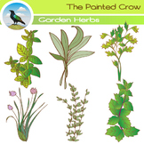 Plant Clip Art - 12 Piece Set - Color and Blackline Illustrations - Garden Herbs