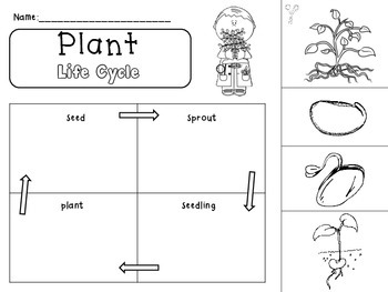 Plant Cycle
