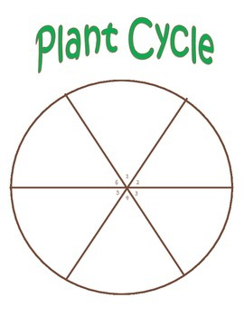 Plant Cycle Charting Activity