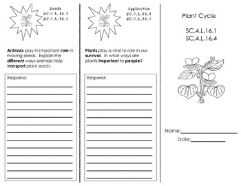 Plant Cycle Trifold
