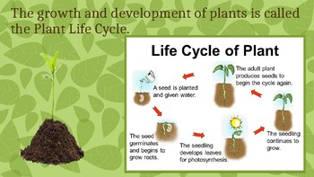 Plant Developement