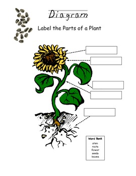 parts of a tennis court diagram diagram parts of a modern plants plant diagram fill-it-in worksheet by emily jo | tpt #12