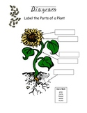 Plant Diagram Fill-It-In Worksheet
