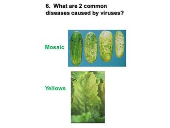 Plant Disease Powerpoint