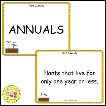 Plant Diversity Vocabulary Cards