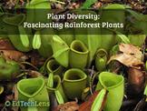 Plant Diversity: Fascinating Rainforest Plants Distance Le