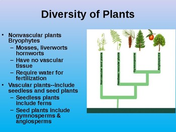 Plant Diversity, Structure and Function