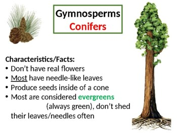 Plant Divisions PowerPoint Presentation