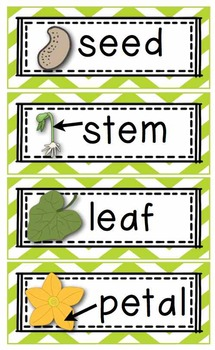 Plant/ Earth Day 18 Literacy, Math, Science Activities!