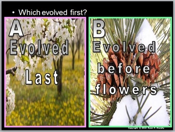 Plant Evolution, Non-vascular Plants, Plant Unit Intro and Grow Study