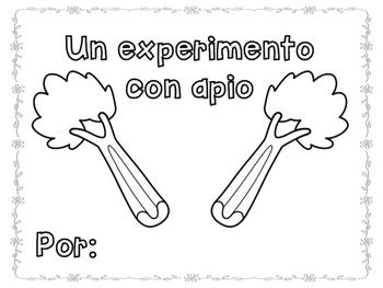 Plant Experiment (Celery)- Spanish