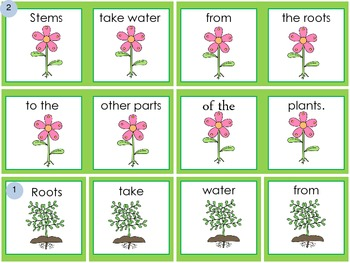 Plant Facts- Sentence Scramble
