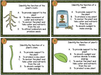 Plant & Flower Anatomy Task Cards