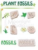 Plant Fossil Clip Art