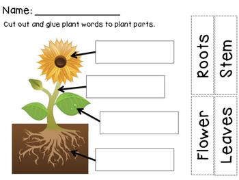 Plant Freebie