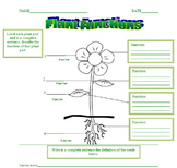 Plant Functions Lesson