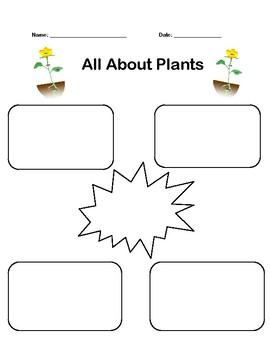 Plant Graphic Organizer