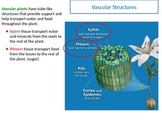 Plant Groups Vascular and Non Vascular