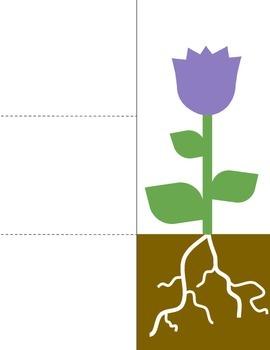 Plant Growth Cross-Curricular Bundle
