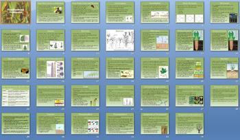 Plant Growth Development Smartboard Notebook Presentation Lesson Plan