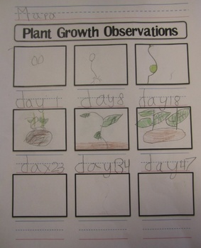 plant growth observation worksheet by shannon allison printplanrepeat. Black Bedroom Furniture Sets. Home Design Ideas