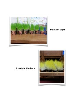 Plant Growth Rate Lab Report