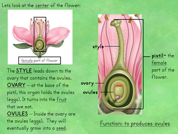 Plant Growth Reproduction And Life Cycle Lessons With Interactive