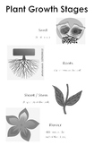 Plant Growth Stages Anchor Chart