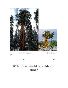 Plant Growth - Tree Rings
