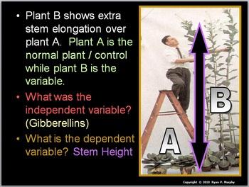 Plant Hormones Lesson