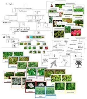 Plant Kingdom Bundle (Color Borders)