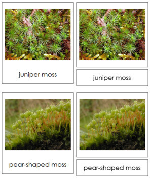 Plant Kingdom: Division Bryophyta
