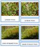 Plant Kingdom: Division Bryophyta (color borders)