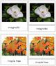 Plant Kingdom: Division Dicotyledon