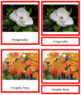 Plant Kingdom: Division Dicotyledon (color borders)