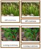 Plant Kingdom: Division Lycopodiophyta (color borders)