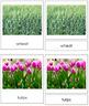 Plant Kingdom: Division Monocotyledon