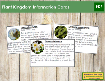 Plant Kingdom: Information Cards