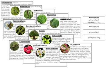 Plant Kingdom: Information Cards