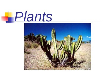 Plant Kingdom Notes