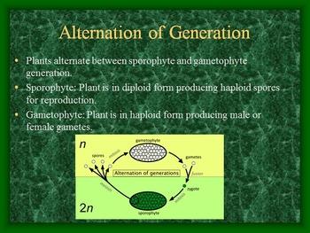 Plant Kingdom Power Point